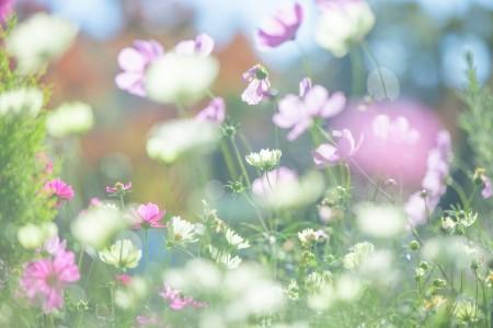 【空室対策】植物の選び方
