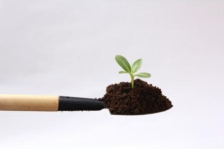 【空室対策】これで安心!植物ノウハウ